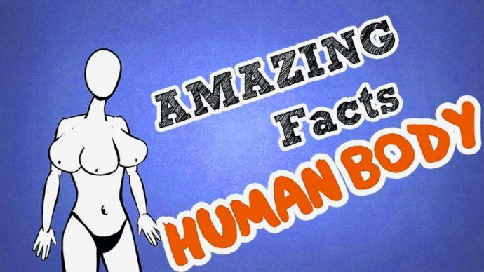 facts-about-human-body