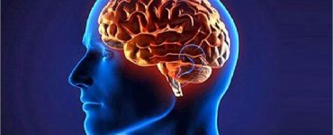 Interesting-Facts-About-Human-Brain