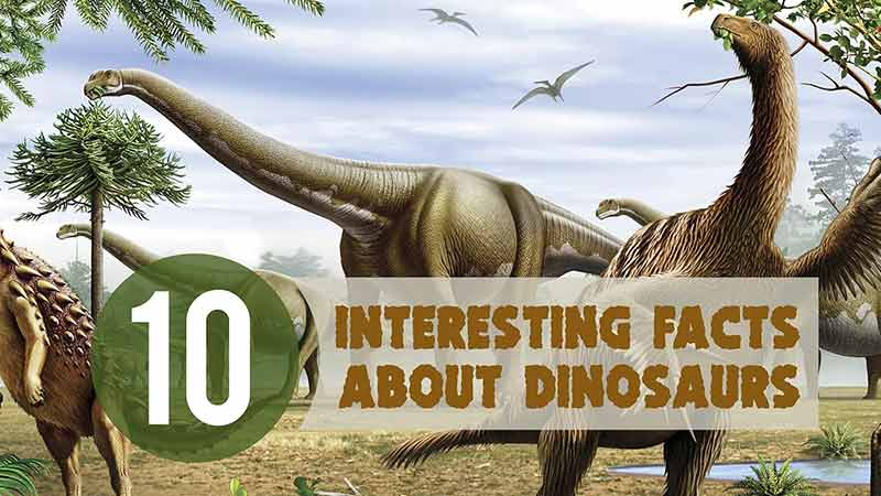 interesting-fact-about-dinasour