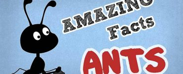 amezing-fact-about-ant