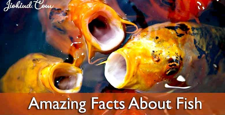 amazing-facts-about-fish