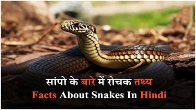 facts-about-snake