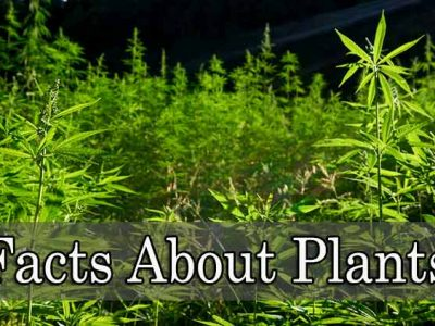 Amazing Facts of Plants